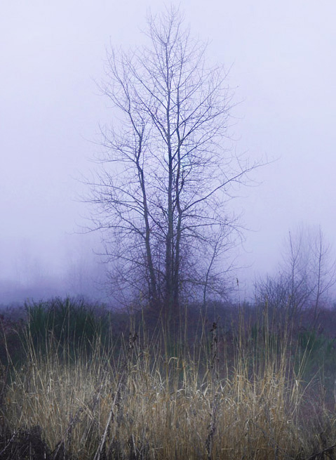 photo of morning tree at Magnuson Park, Seattle